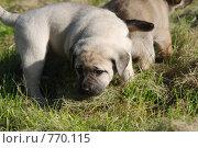 Купить «Первые запахи», фото № 770115, снято 25 сентября 2008 г. (c) Таисия Черемных / Фотобанк Лори