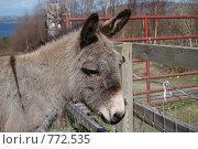 Купить «Голова ослика», фото № 772535, снято 26 марта 2009 г. (c) Татьяна Кахилл / Фотобанк Лори