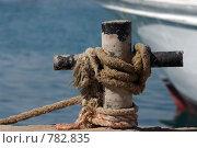 Морской узел. Египет. Стоковое фото, фотограф Здоров Кирилл / Фотобанк Лори