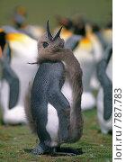Купить «Пингвин», фото № 787783, снято 18 сентября 2019 г. (c) Leksele / Фотобанк Лори