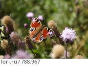 Бабочка. Стоковое фото, фотограф Дмитрий Левченко / Фотобанк Лори