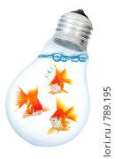 Купить «Золотые рыбки в лампочке», фото № 789195, снято 12 июля 2020 г. (c) Андрей Армягов / Фотобанк Лори