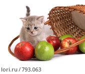 Купить «Котенок и корзинка с фруктами», фото № 793063, снято 21 марта 2009 г. (c) Cветлана Гладкова / Фотобанк Лори