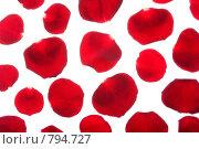 Купить «Красные лепестки розы на белом фоне», фото № 794727, снято 20 января 2008 г. (c) Петухов Геннадий / Фотобанк Лори