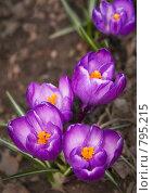 Купить «Краски весны», фото № 795215, снято 4 апреля 2009 г. (c) Сергей Бондарук / Фотобанк Лори