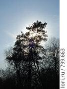 Купить «Весеннее солнышко», фото № 799663, снято 14 марта 2009 г. (c) Петров Алексей / Фотобанк Лори