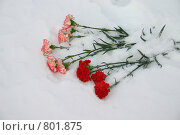 Гвоздики. Стоковое фото, фотограф Андрей Лыженков / Фотобанк Лори