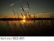 Купить «Сиверское озеро, солнце садится», фото № 803491, снято 10 августа 2008 г. (c) Vladimir Rogozhnikov / Фотобанк Лори