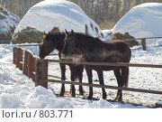 Две лошади у забора, Треща. Стоковое фото, фотограф Михаил Павлов / Фотобанк Лори