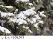Снег на ёлке. Стоковое фото, фотограф Дмитрий Левченко / Фотобанк Лори
