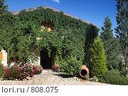 Купить «Зеленый дворик с туей и цветами», фото № 808075, снято 11 июня 2006 г. (c) Харитонова Ольга / Фотобанк Лори