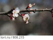 Пчела на цветке. Стоковое фото, фотограф Дмитрий Левченко / Фотобанк Лори