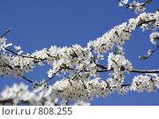 Цветение. Стоковое фото, фотограф Дмитрий Левченко / Фотобанк Лори