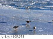 Обед на льду. Стоковое фото, фотограф Владимир Бондаренко / Фотобанк Лори