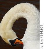 Купить «Лебедь», фото № 814951, снято 12 апреля 2009 г. (c) Андрей Лабутин / Фотобанк Лори