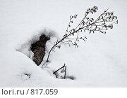 Купить «Ранняя весна в саду», фото № 817059, снято 25 апреля 2018 г. (c) Парушин Евгений / Фотобанк Лори