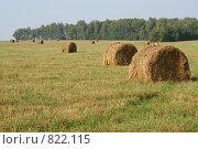 Купить «Поле, сено и небо», фото № 822115, снято 7 сентября 2008 г. (c) Дятлов Антон / Фотобанк Лори