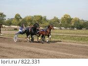 На финишной прямой два жеребца (2008 год). Редакционное фото, фотограф Любовь Похабова / Фотобанк Лори