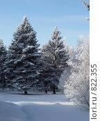 Заснеженные елки. Стоковое фото, фотограф Елена Середникова / Фотобанк Лори