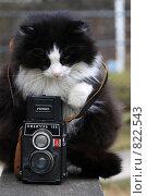 Купить «Кот с фотоаппаратом», фото № 822543, снято 20 апреля 2009 г. (c) Яна Королёва / Фотобанк Лори