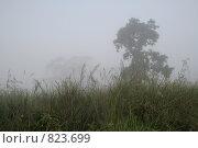 Купить «Раннее утро, национальный парк Читван, Непал», фото № 823699, снято 1 ноября 2008 г. (c) Кудрина Надежда / Фотобанк Лори