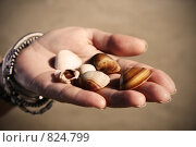 Купить «Винтажное изображение морских ракушек на протянутой женской ладони, ярко освещенных солнцем», фото № 824799, снято 25 мая 2018 г. (c) Светлана Привезенцева / Фотобанк Лори