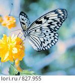 Купить «Бабочка на цветке», фото № 827955, снято 13 апреля 2009 г. (c) Тупикина Юля / Фотобанк Лори