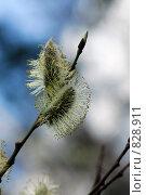 Купить «Почка», фото № 828911, снято 10 апреля 2008 г. (c) Синицын Игорь / Фотобанк Лори