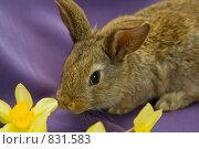 Купить «Крольчонок», фото № 831583, снято 21 апреля 2009 г. (c) Галина Лукьяненко / Фотобанк Лори
