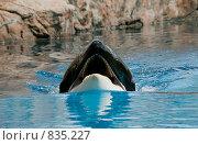 Голубой кит. Стоковое фото, фотограф Beniamin  Gelman / Фотобанк Лори