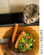 Купить «Кот смотрит на стол с едой», фото № 842063, снято 1 мая 2009 г. (c) Beniamin  Gelman / Фотобанк Лори