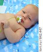 Младенец с ромашкой в руке. Стоковое фото, фотограф Матвеева Наталья / Фотобанк Лори