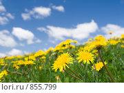Купить «Навстречу солнечным лучам», фото № 855799, снято 10 мая 2009 г. (c) Игорь Киселёв / Фотобанк Лори