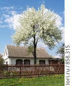 Весна, дача, отдых, фото № 858315, снято 9 мая 2009 г. (c) Примак Полина / Фотобанк Лори