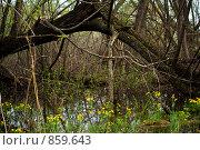 Весна. Болото. Стоковое фото, фотограф Виктор Ковалев / Фотобанк Лори