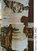 Купить «Ствол березы», фото № 861943, снято 8 мая 2009 г. (c) Наталия Печёрских / Фотобанк Лори