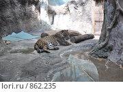 Московский зоопарк. Стоковое фото, фотограф Наталья Самсонова / Фотобанк Лори