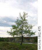 Дерево на берегу реки. Стоковое фото, фотограф Владимир Бегунов / Фотобанк Лори