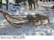 Купить «Сани Фрагмент оленьей упряжки», фото № 863299, снято 20 февраля 2007 г. (c) Анна Зеленская / Фотобанк Лори