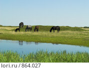 Купить «Летний пейзаж с лошадьми», фото № 864027, снято 12 мая 2009 г. (c) Andrey M / Фотобанк Лори