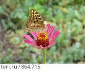 Бабочка на цветке. Стоковое фото, фотограф Александр Завгородний / Фотобанк Лори