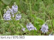 Полевые цветы. Стоковое фото, фотограф Григорий Дашкин / Фотобанк Лори