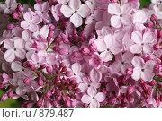 Купить «Сиреневый фон», фото № 879487, снято 19 мая 2009 г. (c) Наталья Волкова / Фотобанк Лори