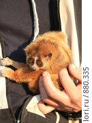Купить «Лори», эксклюзивное фото № 880335, снято 26 апреля 2009 г. (c) Яна Королёва / Фотобанк Лори