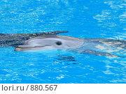 Купить «Дельфин», эксклюзивное фото № 880567, снято 7 мая 2009 г. (c) Яна Королёва / Фотобанк Лори