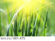Купить «Травинки, залитые солнцем», эксклюзивное фото № 881475, снято 23 мая 2009 г. (c) Juliya Shumskaya / Blue Bear Studio / Фотобанк Лори