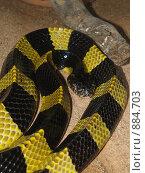 Купить «Ядовитая змея», фото № 884703, снято 12 августа 2007 г. (c) Примак Полина / Фотобанк Лори