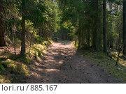 Купить «Дорога в лесу», фото № 885167, снято 5 мая 2009 г. (c) Кондорский Дмитрий / Фотобанк Лори