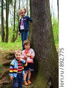 Купить «Дети в лесу», фото № 892775, снято 16 июня 2008 г. (c) ИВА Афонская / Фотобанк Лори