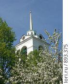 Купить «Псков. Колокольня за цветущими деревьями», фото № 893375, снято 21 мая 2007 г. (c) Наталия Журавлёва / Фотобанк Лори